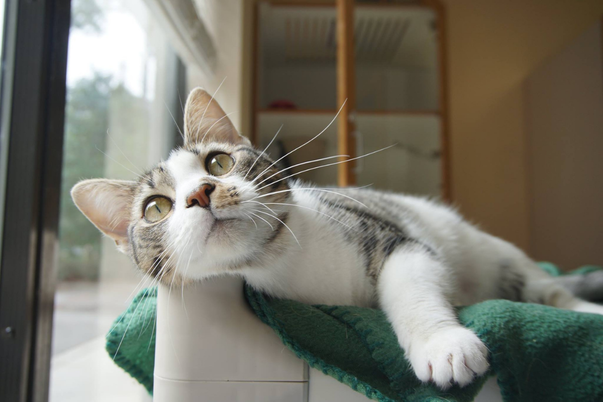 cat laying on cat tower