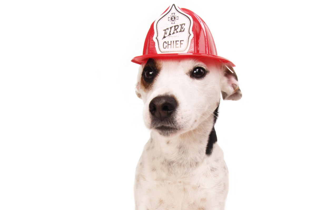 dog in fire hat