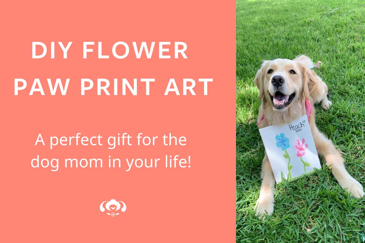 dog with artwork