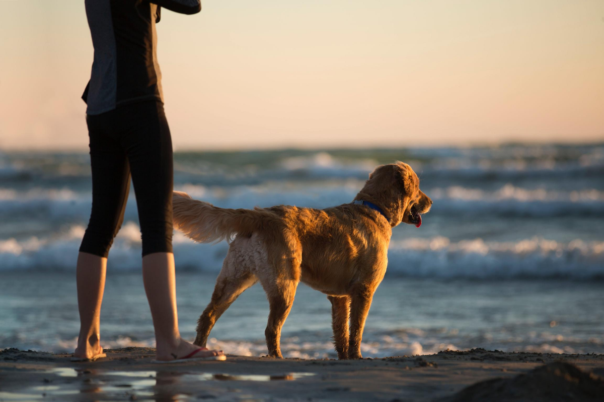 dog at beach with owner