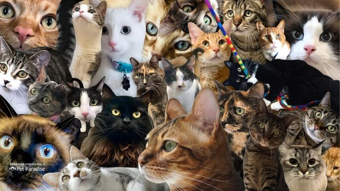 zoom background cats