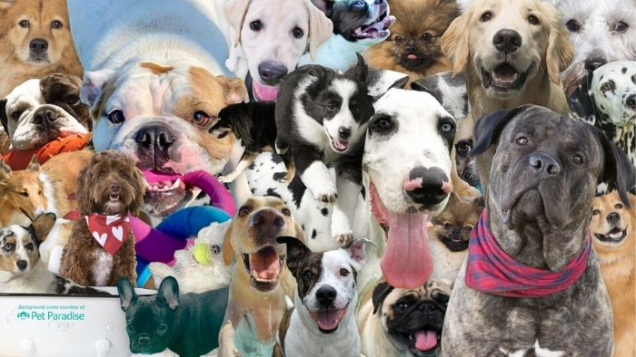 zoom background dogs
