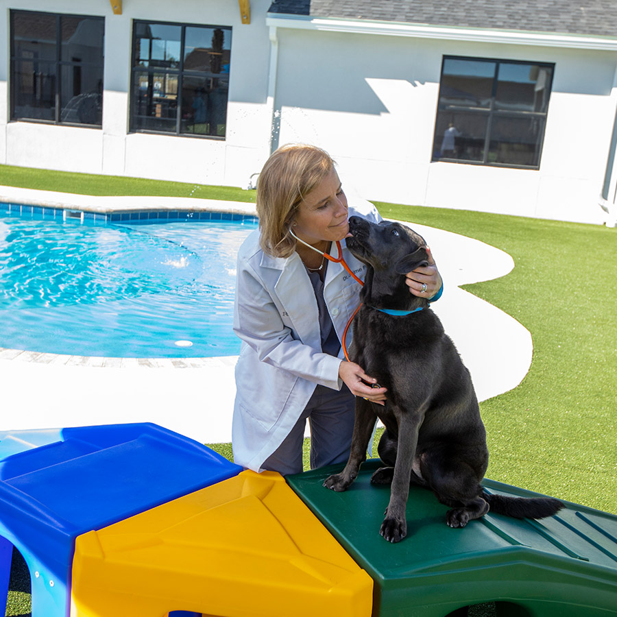 Lakewood Ranch Veterinary Clinic Pet Paradise