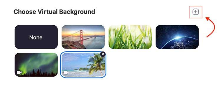 free-pet-zoom-background