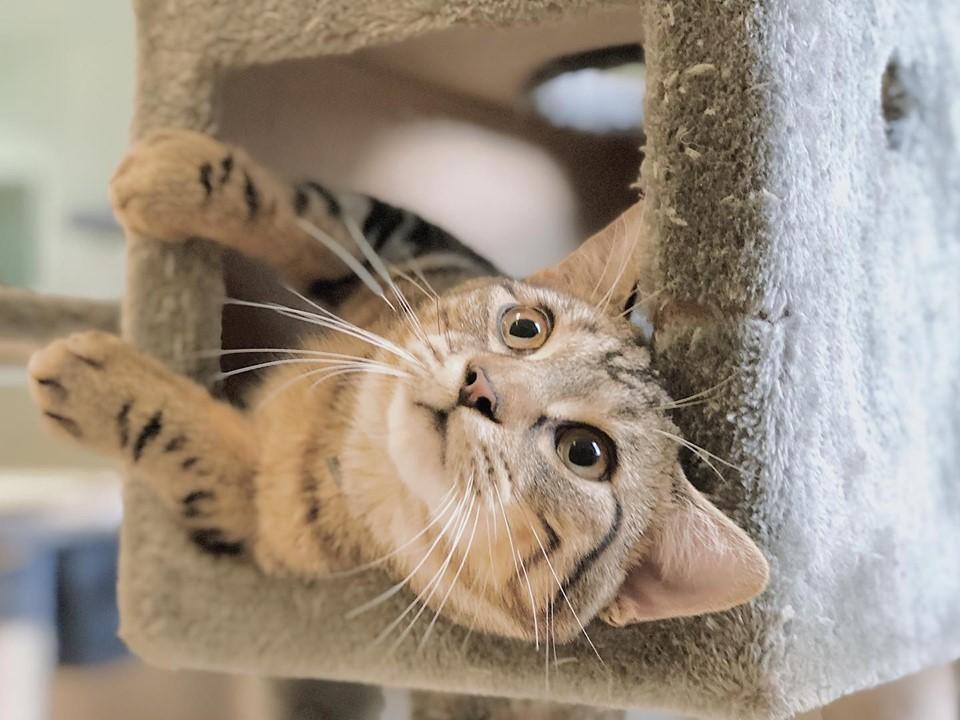 Houston Hobby Pet Boarding   Pet Paradise