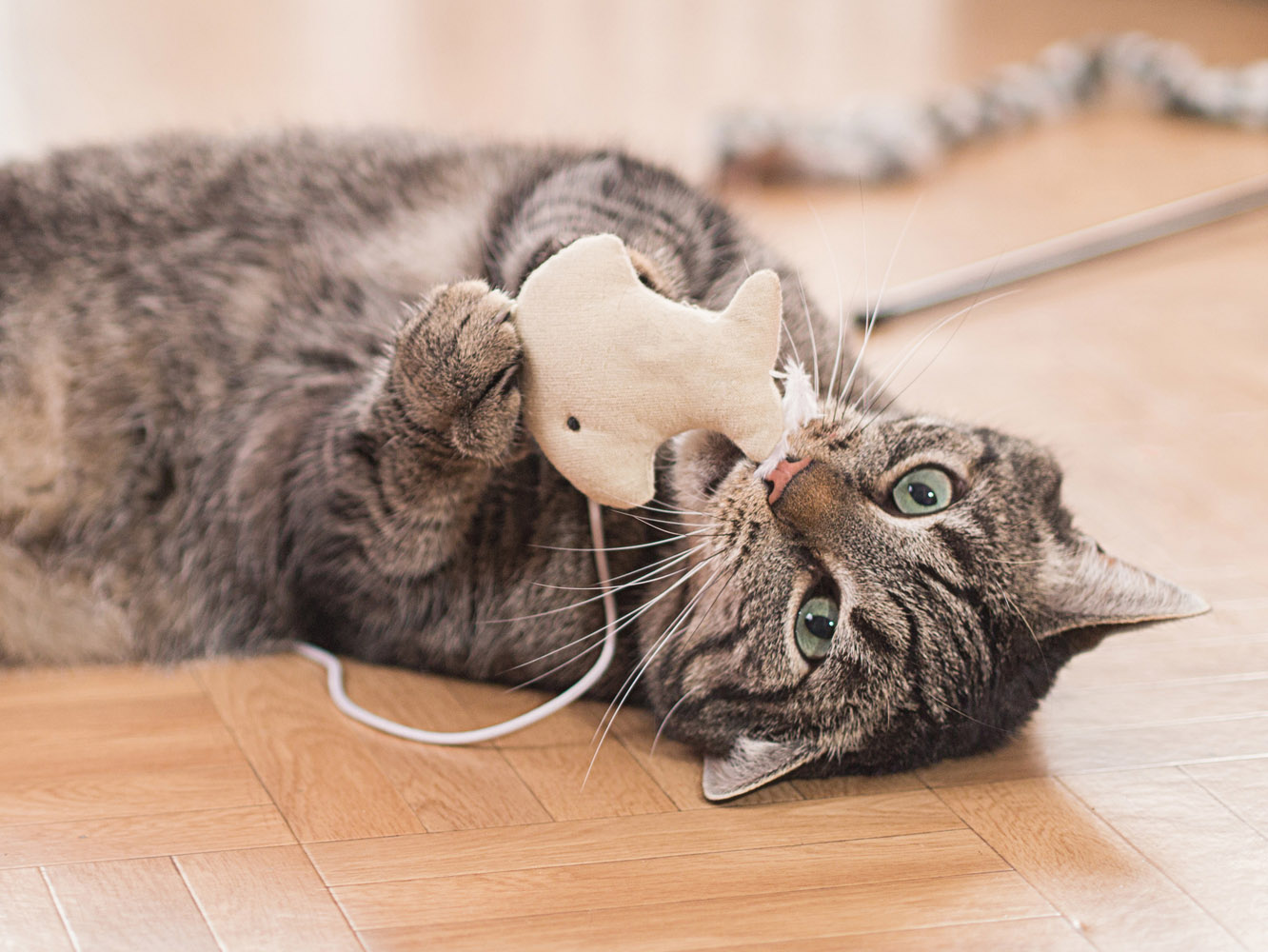Cat playing with mouse toy