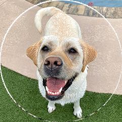veterinarian client